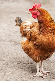 A Volusia County teen bit the head off a live chicken this past weekend