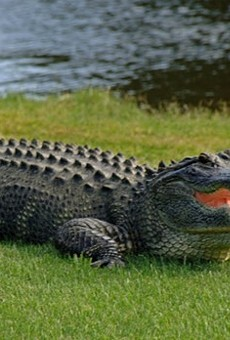 You'll never know what you're made of until you hunt an alligator