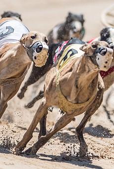 Florida Supreme Court will take up proposed greyhound racing ban