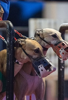 Florida has decided to ban greyhound racing