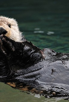 Wekiva Island promises plenty of craft beer for Otter Fest; not as confident about otters