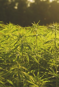 Florida's new cannabis chief sees potential in hemp
