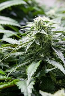 Medical marijuana provider VidaCann opens new dispensary in Orlando