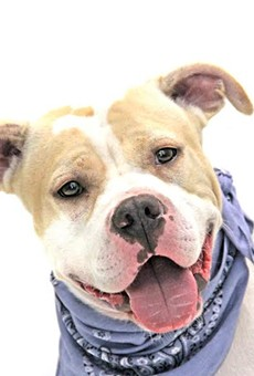 Adoptable dog of the week: Lover Boy