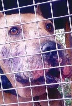 Animal welfare advocates want to know why county left neglected dogs at property