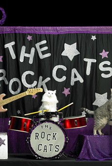 Best! Job! Ever! Acro-Cats seek tour assistant to travel cross-country with cat circus