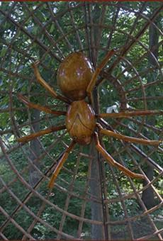 Bug-A-Palooza kicks off Leu Gardens' Big Bugs exhibit on Saturday