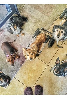 Local nonprofit and Orange County Animal Services team up to treat shelter dogs with heartworm