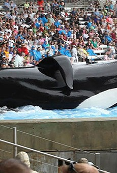 SeaWorld's decision to end orca breeding is motivated by money more than morality