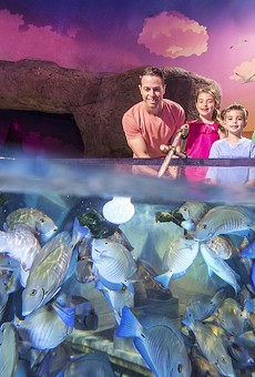Sea Life Orlando Aquarium will launch multi-sensory fish feeding experience