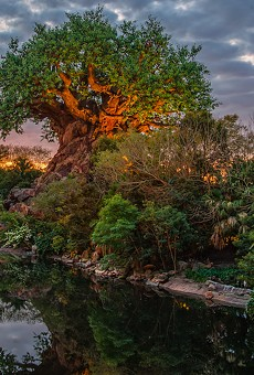 Disney delays Earth Day debut for Rivers of Light show, announces other activities