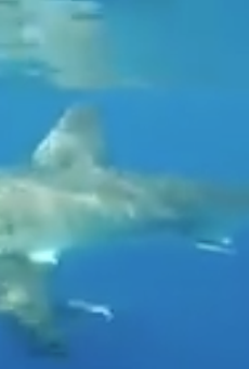 Central Florida teens have close encounter with great white shark near Ponce Inlet