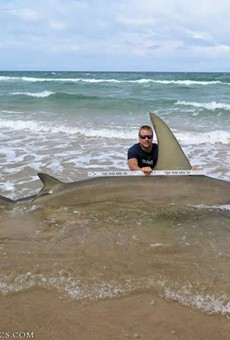 Man catches staggeringly big 13-foot-long hammerhead shark