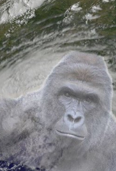 There's a petition to rename Tropical Storm Hermine to Harambe