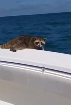 Florida man apologizes for leaving a raccoon to die 20 miles offshore
