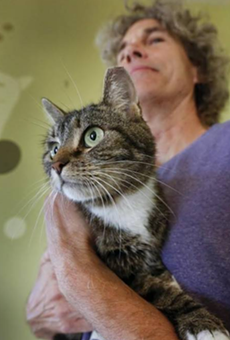 After months on the lam, missing Florida house cat found in Kansas