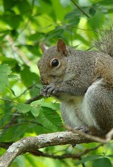 Squirrel attacks Central Florida senior center, 3 injured