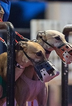 Greyhound racing groups are already trying to overturn Amendment 13 in Florida