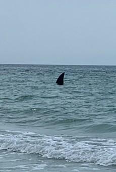 Tampa Bay news stations fall for hilariously fake shark fin