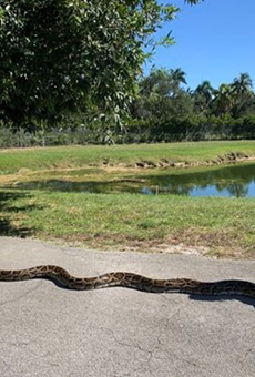 Florida python hunters capture record-setting 18-foot snake, largest ever removed from Big Cypress
