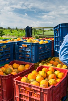 For lots of reasons, Florida's citrus industry says it's 'pretty close to a cliff'