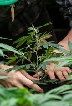 Florida Chamber of Commerce actively opposing amendment to legalize recreational marijuana