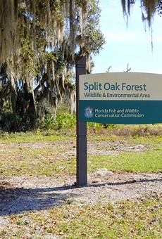 Orange County Commissioner says Split Oak Forest toll road approval was filed under the wrong code