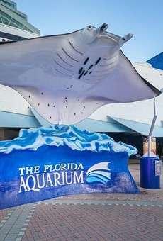 Tampa's Florida Aquarium announces multimillion dollar updates, 25th anniversary adult slumber party (6)
