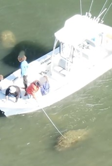 Florida boat captain says he's now getting death threats after being filmed harassing manatee
