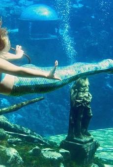 Weeki Wachee, Florida's mermaid city, officially dissolves