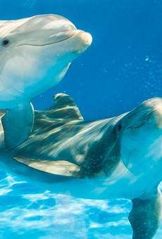 SeaWorld Orlando expands hours to open Thursdays through Sept. 6