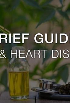A Brief Guide on CBD & Heart Disease