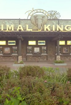 Animal Kingdom's Disney+ debut might be a sign of more streaming content ahead from Orlando parks