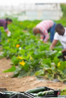 Florida farmworkers