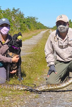 Florida's new python-sniffing dog Truman bags 8-foot python, is confirmed to be a good boy