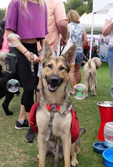 Paws in the Park, a fundraising festival by Pet Alliance of Greater Orlando, will take place May 8 in Lake Eola Park at 10 a.m.