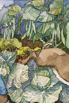 Peter Rabbit gets into trouble in one of the illustrations for Mad Cow Theatre's 'Bedtime Tales of Long Ago.'
