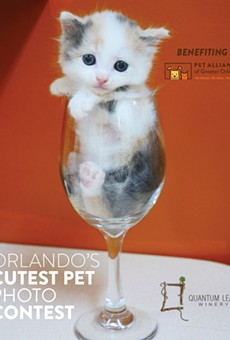 Pet Alliance of Greater Orlando wants to know if your pet is the cutest in the city