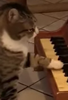 Commence purring dramatically! CatVideoFest returns to Mailtand's Enzian Theater
