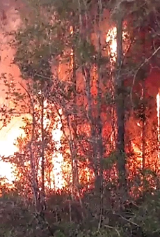Florida man accidentally destroys 10 homes after burning books in his yard