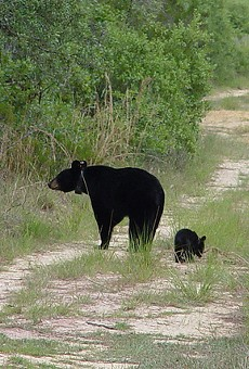 There's now a $5,000 reward for info regarding the black bear shot in Sanford