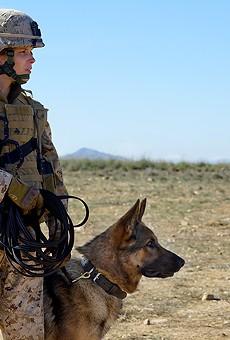Megan Leavey showcases canine heroism