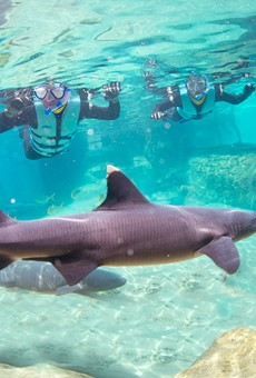 SeaWorld's Discovery Cove will now let guests swim with sharks