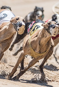 Florida gambling officials approve ending dog races at Miami track