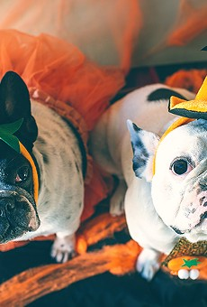 Mennello Museum invites you to dress up your puppers and doggos for Howl O' Woof in the sculpture garden