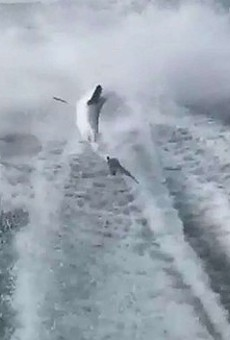 The Florida men who filmed themselves dragging a shark behind their boat have pleaded not guilty
