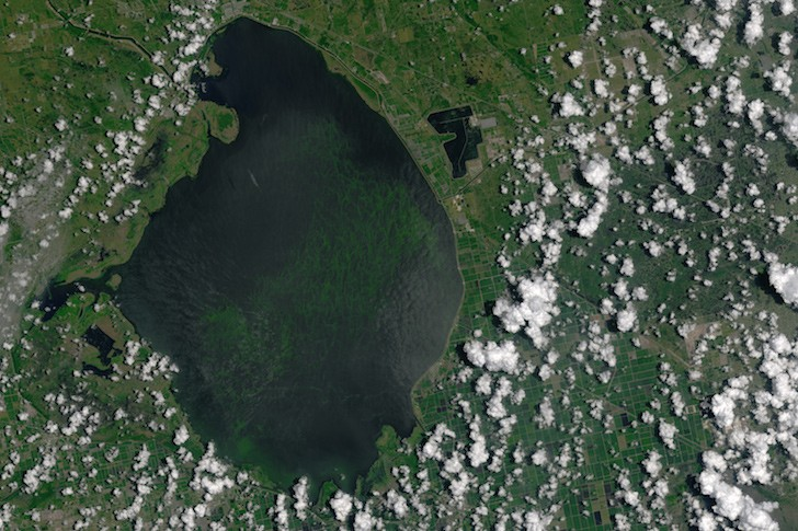 Candidates for Florida governor target toxic algae outbreaks