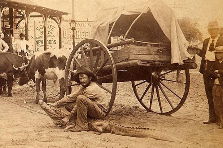 Rancher wrangling an alligator in front of Sinclair's Real Estate Agency at Orange Avenue and Pine Street, 1855.