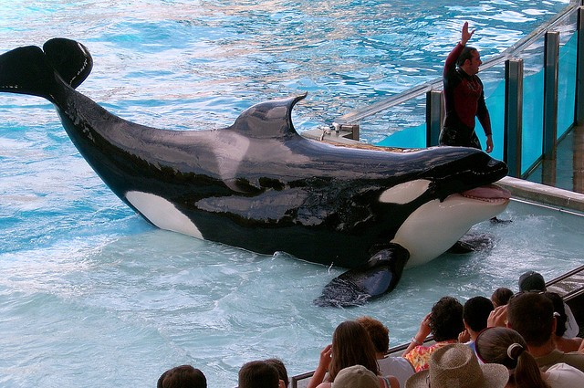 30-year-old orca dies at SeaWorld park in Orlando