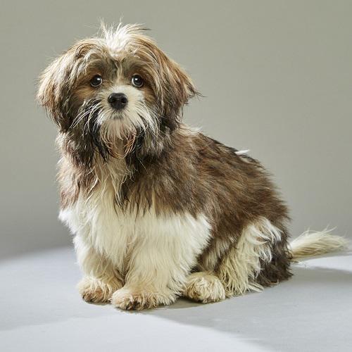 PHOTO VIA LITTLE DOG RESCUE